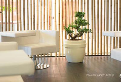 Florapro biedt hydro potten voor particulieren groene meubelstukken op De Duurzame Kaart