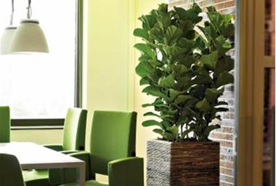 Bel Florapro voor biologische planten op kantoor. De Duurzame Kaart