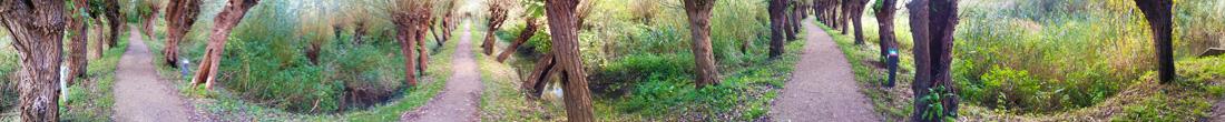 Rhoonse Grienden panorama foto wilgen langs paden De Duurzame Kaart
