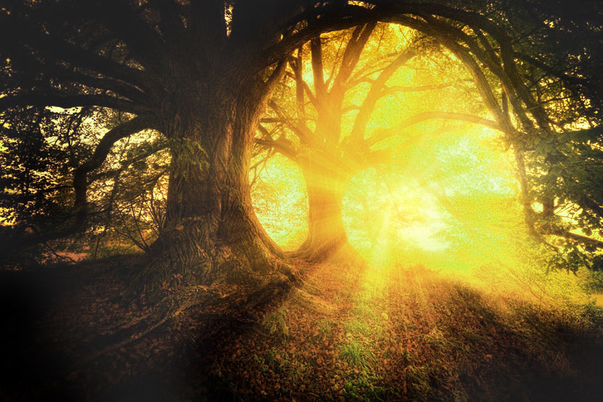 Bios Urn Plantbegeleiding leven na de dood as De Duurzame Kaart