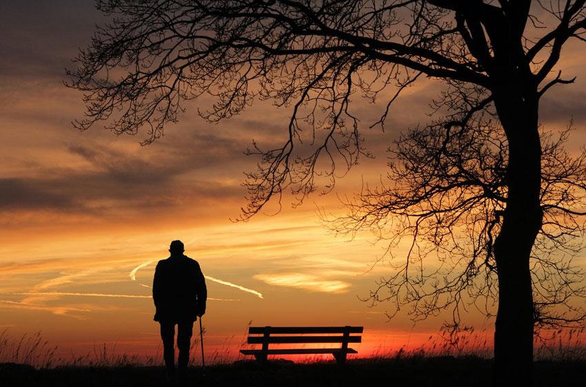 Bios Urn zaailing herinneren herinneringsboom De Duurzame Kaart