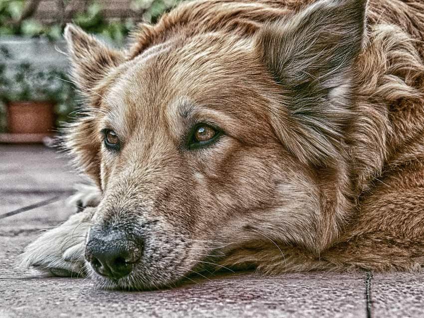 Urn hond kat voor buiten overleden gedenkteken tuin begraven herdershond