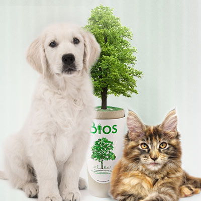 Urn kat hond in tuin begraven dierenurn De Duurzame Kaart