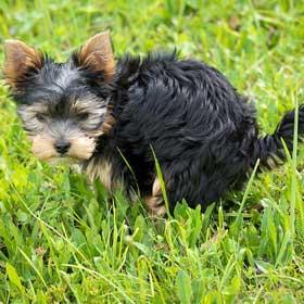 Hondenpoep parasieten bacteriën Yorkshire zwerfvuil De Duurzame Kaart