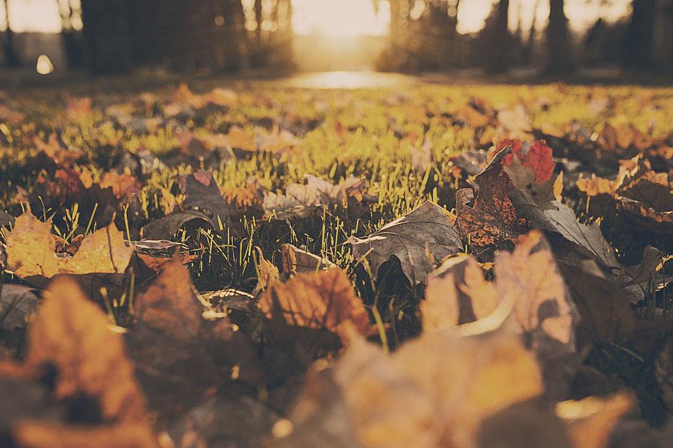 Natuurlijke kringloop Geral Overbeek bladeren herfst gazon De Duurzame Kaart
