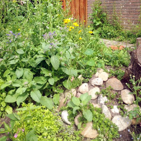 Komkommerkruid stenen hout natuurlijk tuinieren