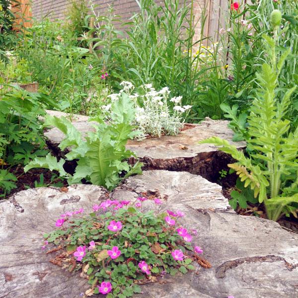Wilde bloemen planten insectentuin