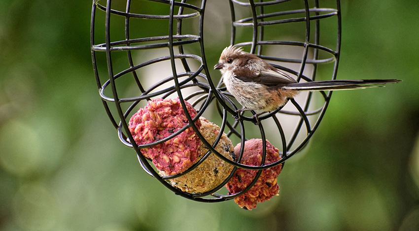 Groener leven vogels in de tuin voeren
