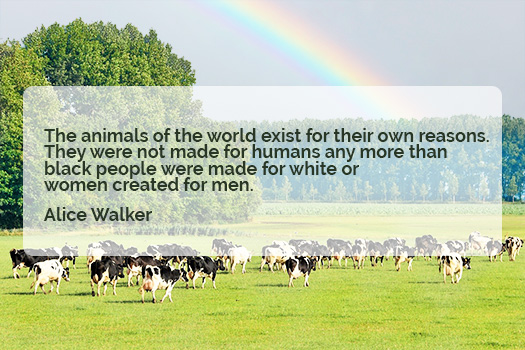 Nationale week zonder vlees Alice walker quote the animals of the world