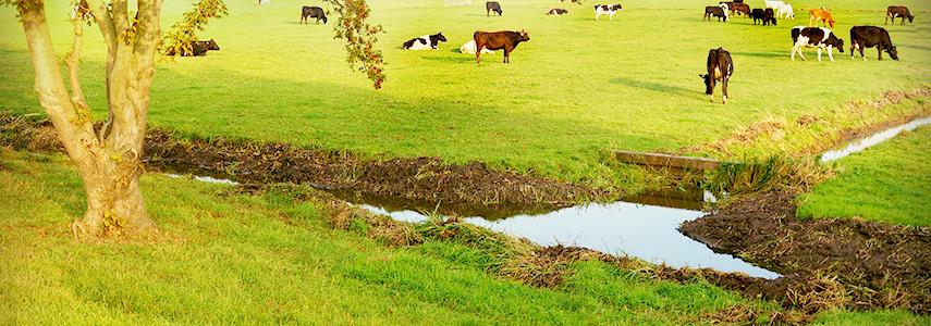 Waterbesparen klimaat sloot Nederland koeien