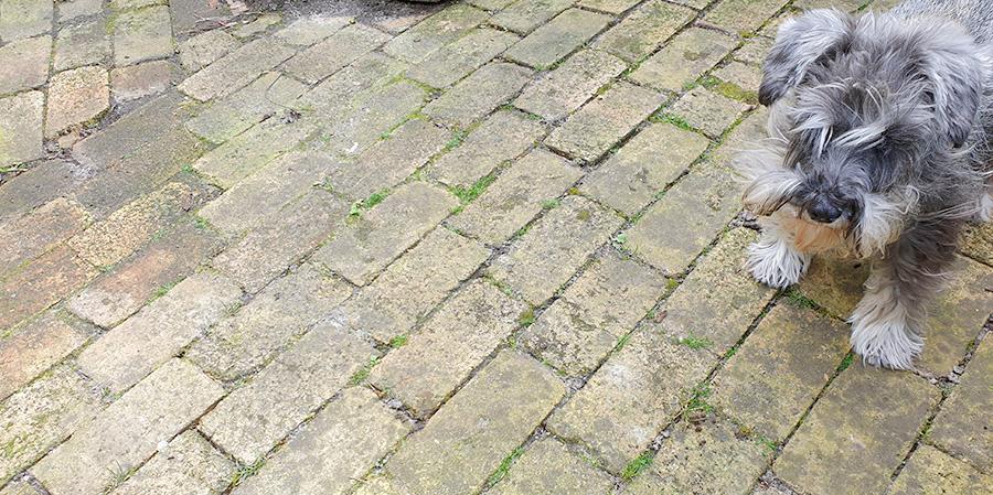 Groene tegels schoonmaken met azijn